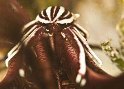 malapascua-marine-life-evolution-divers-malapascua-philippines-8
