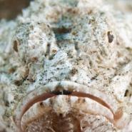 malapascua-marine-life-evolution-divers-malapascua-philippines-13