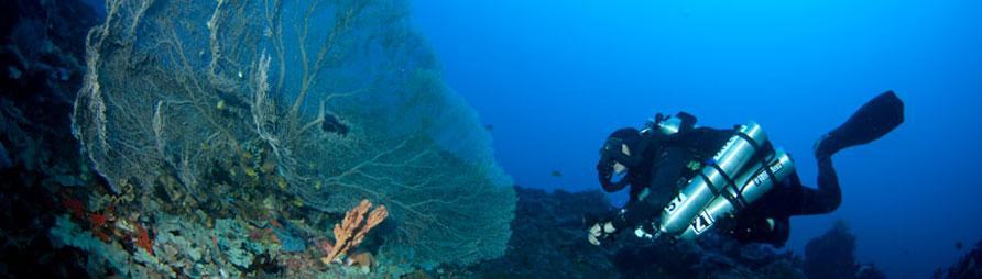 technical dive sites malapascua philippines