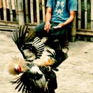 malapascua-island-philippines-8