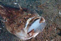 malapascua-marine-life-evolution-divers-malapascua-philippines-21