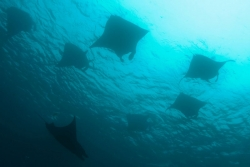 malapascua-marine-life-evolution-divers-malapascua-philippines-5
