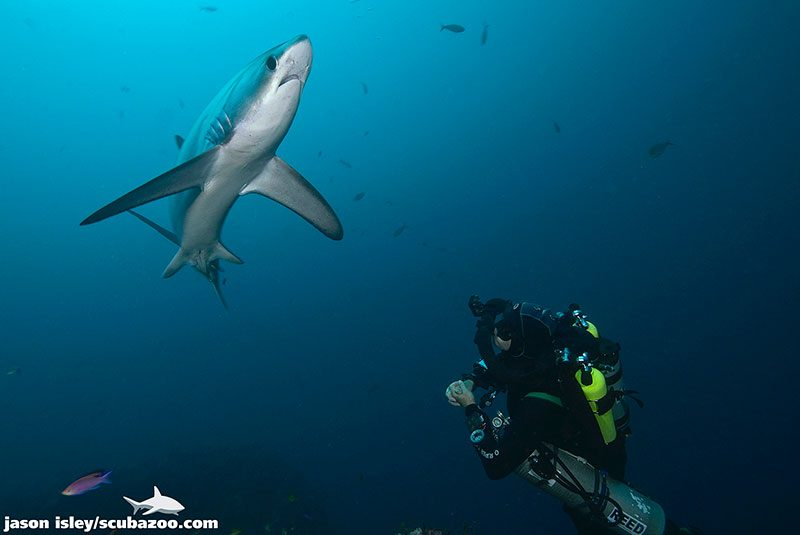 technical diving with thresher sharks malapascua philippines