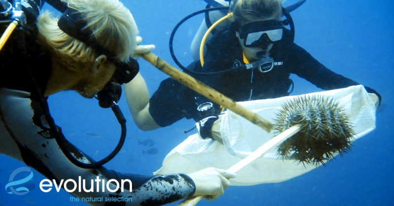 saving the reef evolution dive resort malapascua