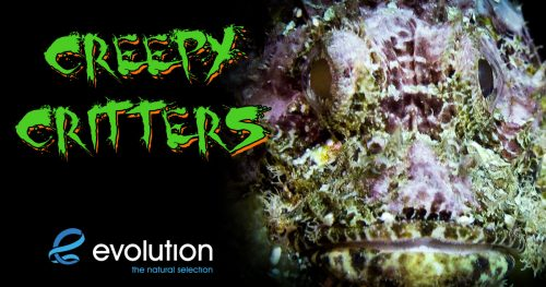 halloween creepy critters malapascua evolution diving resort