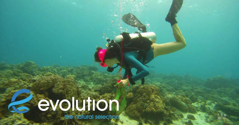 clean up dives evolution diving resort malapascua